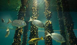 El Museo do Mar, en Vigo, será un lugar de exploración y descubrimiento para los más pequeños. Imagen en museodomar.com